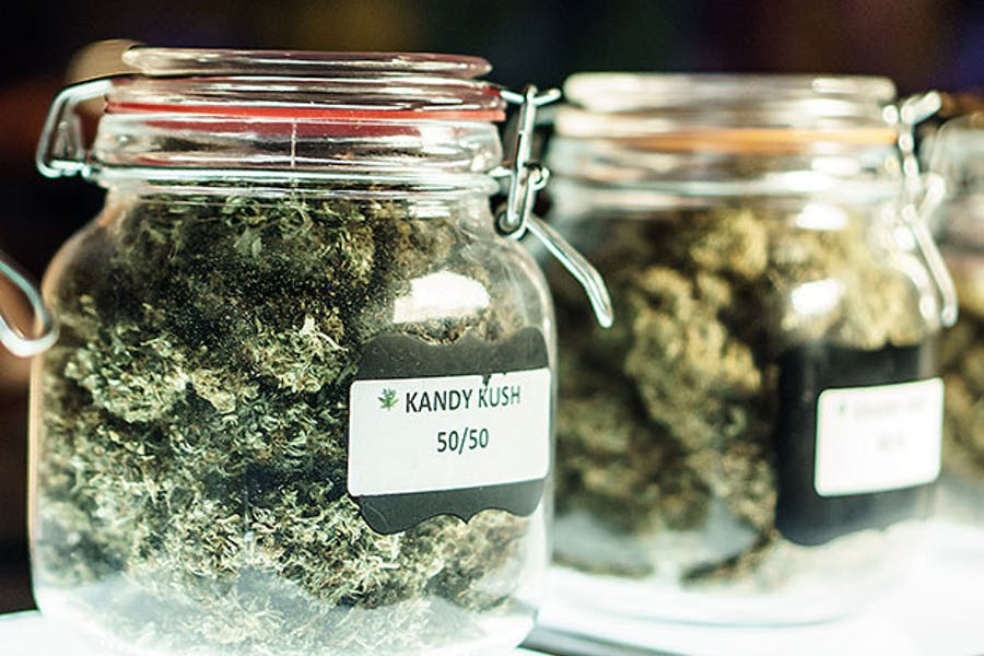 Weed Strains - How Do You Choose the Right One?