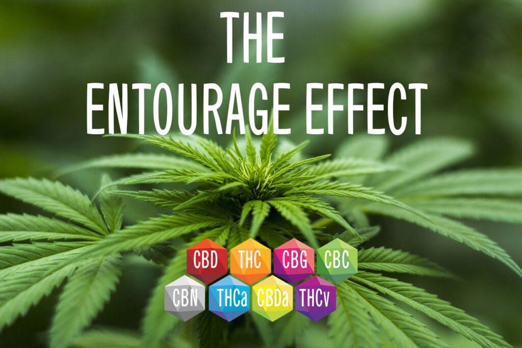 entourage-effect