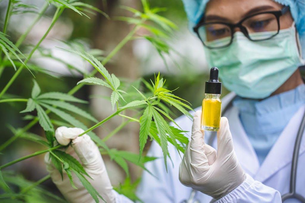 cannabis-scientist-hemp-oil