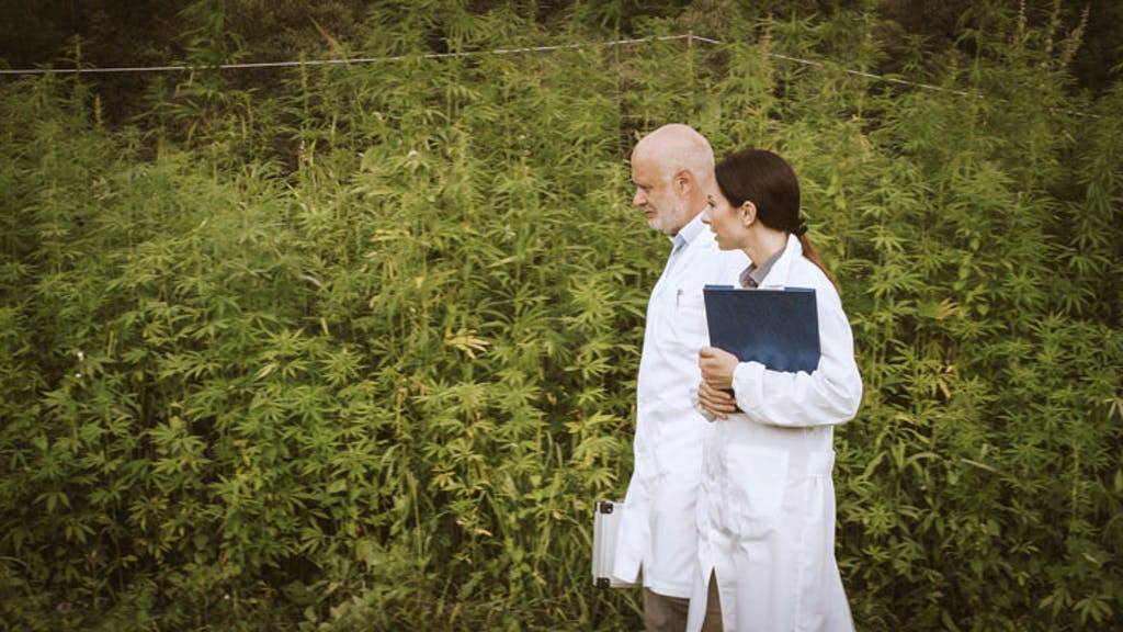 scientists-in-cannabis-field