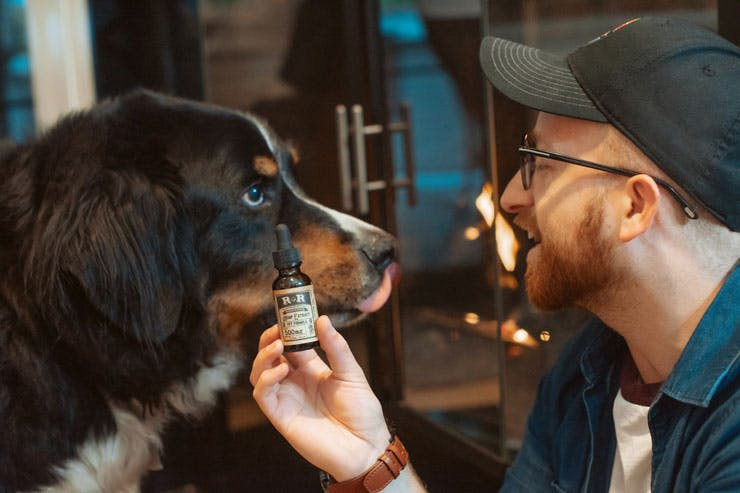 CBD tincture with dog