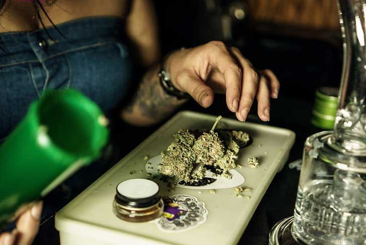 Exposure to cannabis can cause allergies