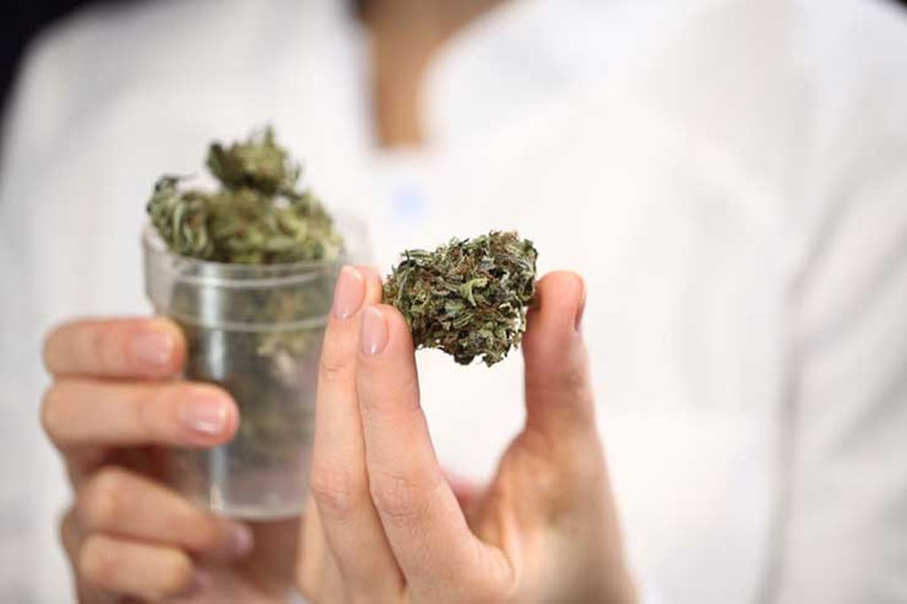 Cannabis flower in a dispensary