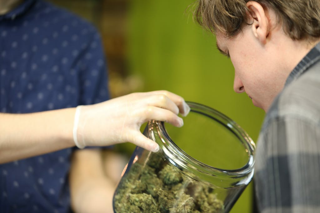 How to choose what cannabis you want