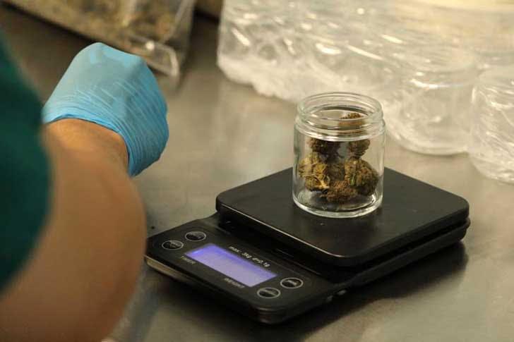 Weighing marijuana in jars