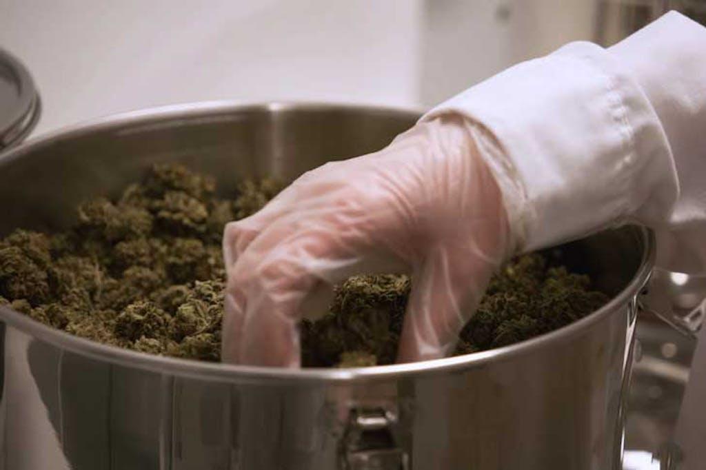 Marijuana in a bucket