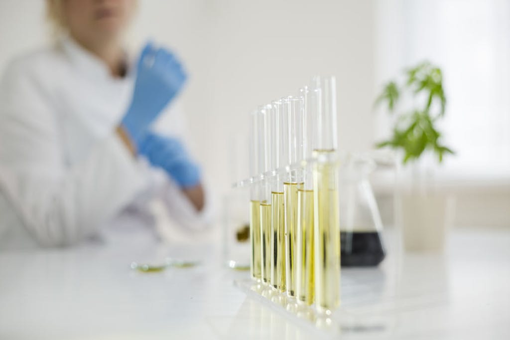 scientist working with cannabis extracts