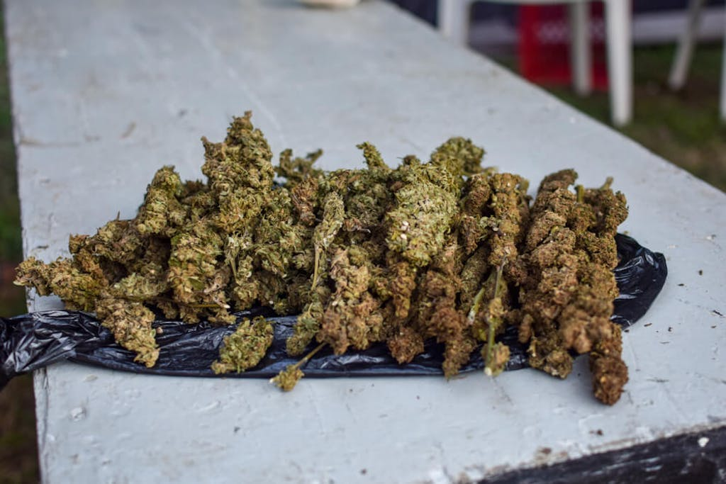 Cannabis on table in Jamaica