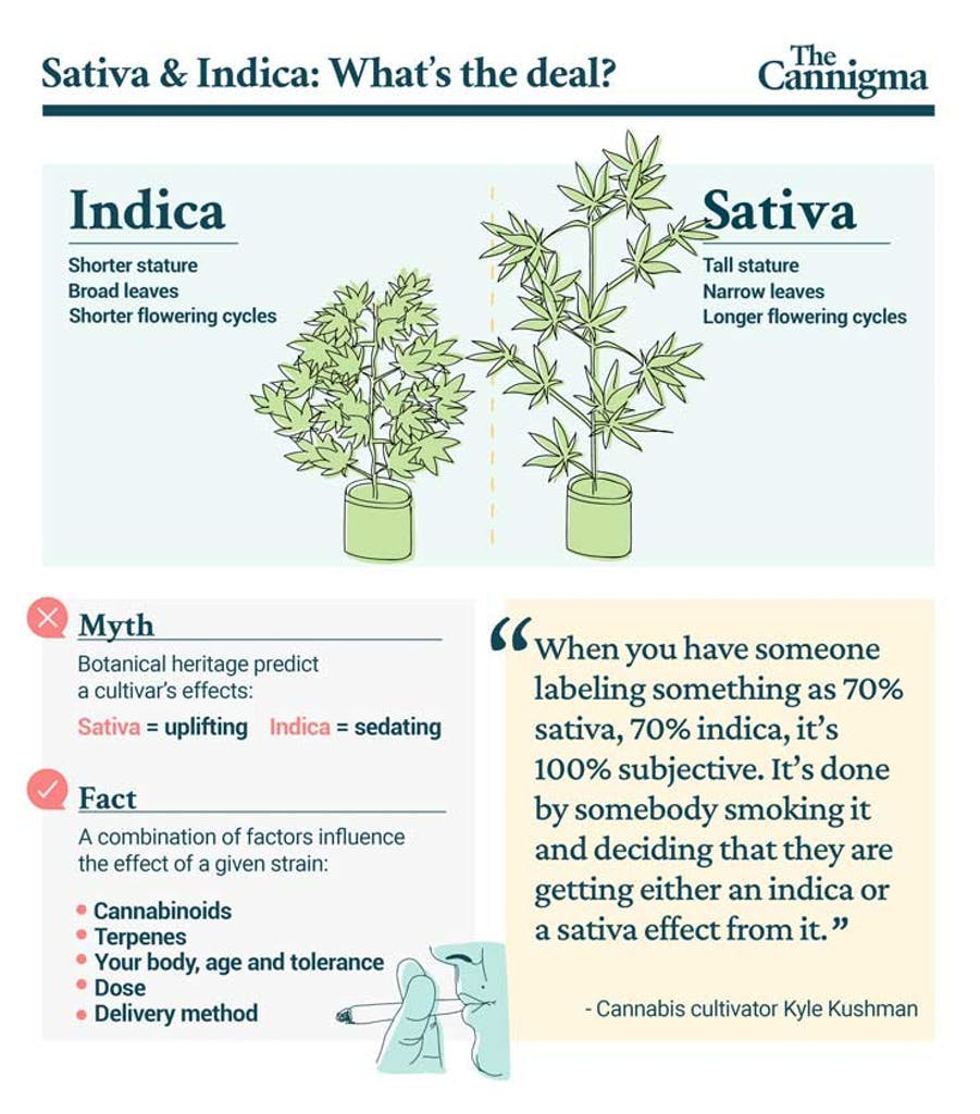 Indica vs Sativa: all you need to know