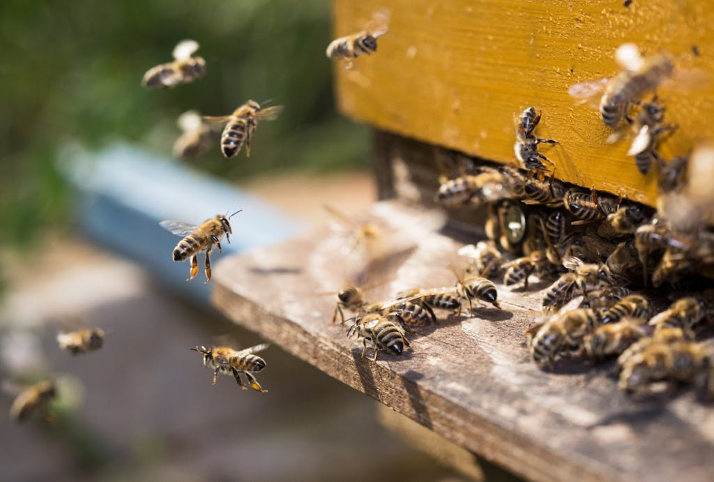 Bees leave their hive