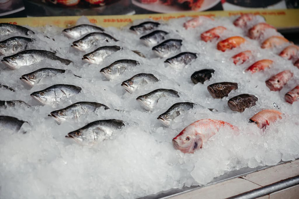 Fresh fish is displayed on ice in a market
