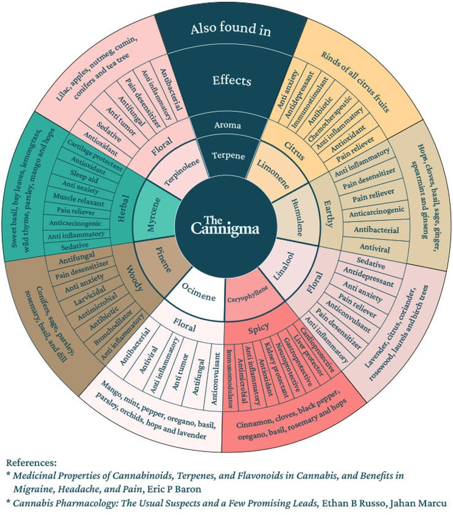Chart showing the synergy between cannabinoids and terpenes