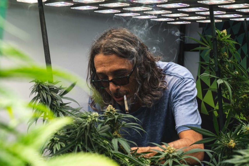 Kyle Kushman smokes a joint as he tends to his marijuana plants