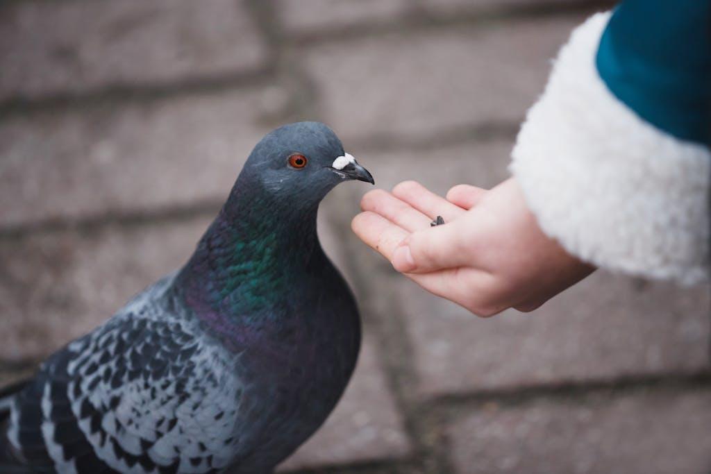 Parece que existe un solo estudio que realmente evaluó la efectividad del delta-10-THC - un experimento realizado en palomas que aparentemente no quedaban drogadas. Obviamente, los humanos no son palomas. (Shutterstock)