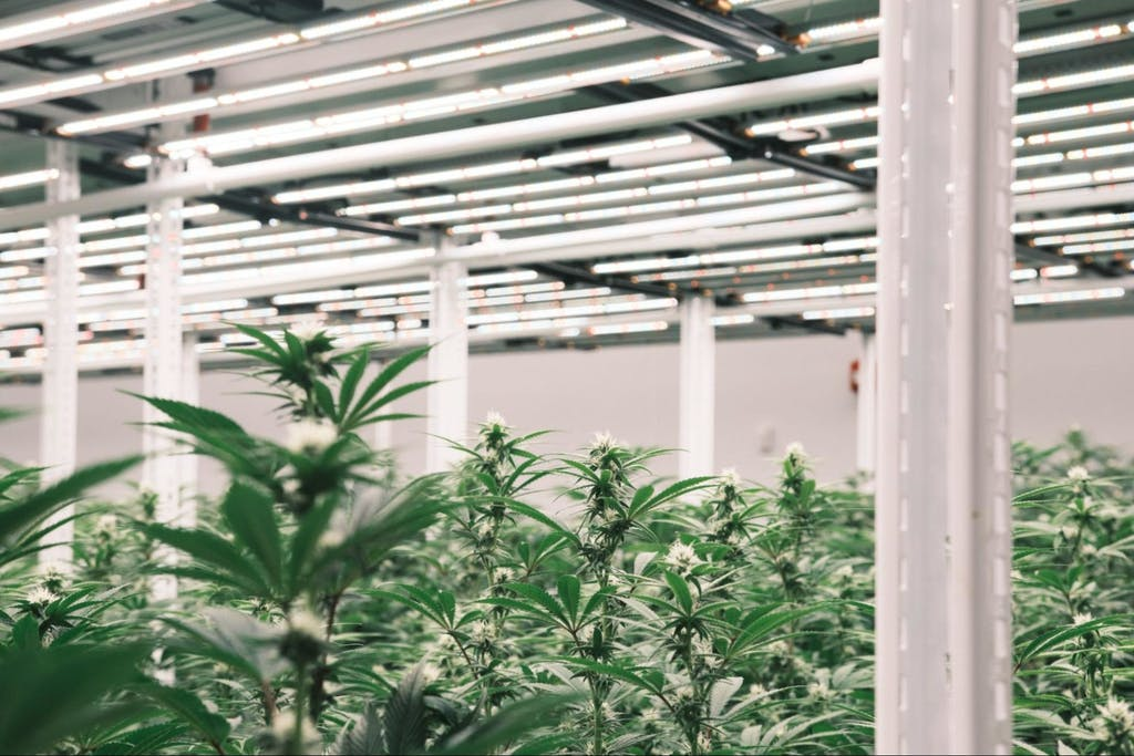 Jushi Holding cultivation facility in Virginia