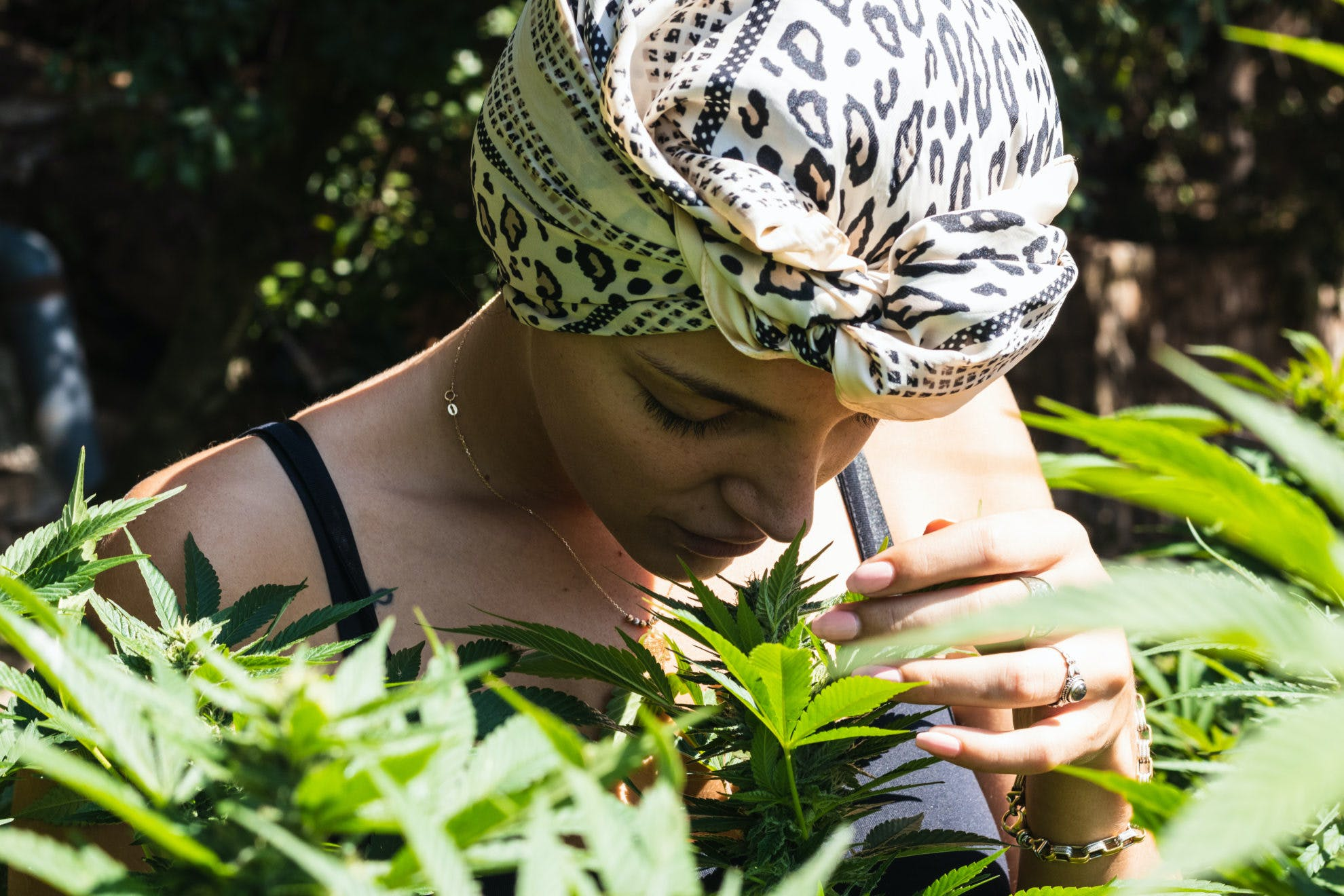 photo of If you like how cannabis smells – does that mean it'll be better for you? image